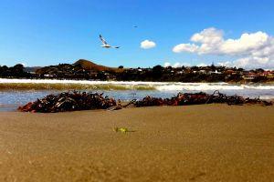 sea weeds waves breaking waves seagull blue sky cloudy sea life seaside sky ocean
