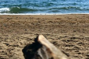 seashore beach wood daylight waves shore sea close-up sand log