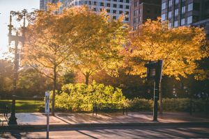 shadoews light city bench trees