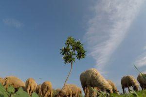 sheep cute farm nature sky tree animals
