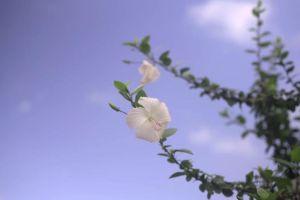sky flower flora clouds