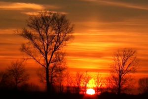 sky trees nature sunset sun