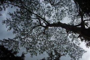 sleeping trees lying down under the tree outdoor nature mother nature sri lanka dark uphill