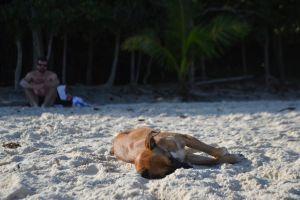 sleepy dog summer puppy sand beach sleeping sleep cute