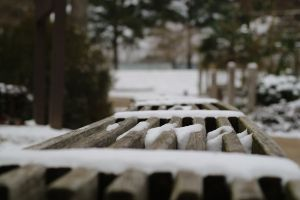 snow blurred outdoor cold wooden bench wood evergreen perspective snowcovered bench