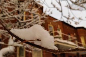 snow daytime blurred background tree