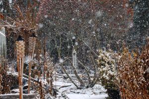 snow flakes falling snow winter snow