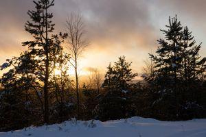 snow lapland pines trees