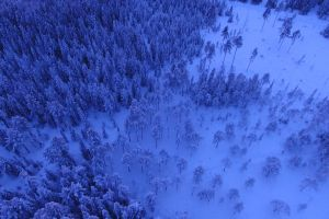 snow woods scenic cold forest winter foggy aerial shot sky fog