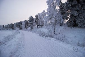 snowy path lapland frozen trees winter