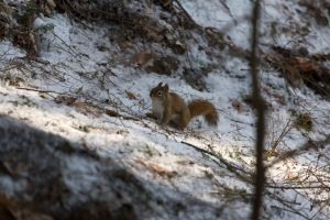 squirrel animals snow winter nature