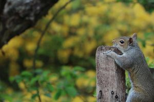 squirrel wood wildlife animal cute