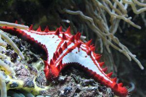 starfish tropical saltwater