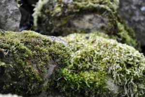stone moss nature