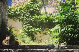 stones greenleef mobilechallenge sittingcat cat stair sicily