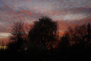 strking sunset light willow sky
