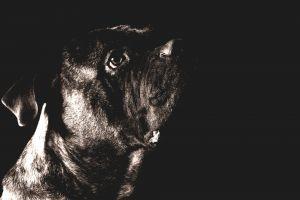 studio cute sit hair dog close-up adorable shiny looking portrait