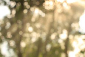 sun glare daylight trees
