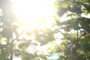 sun glare sunlight branches sun trees daylight bright