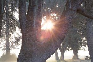 sunlight park tree