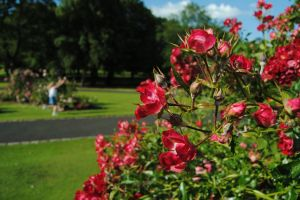 sunny red blurred summer beautiful flowers child park green blurred background
