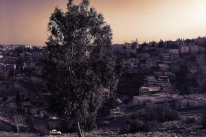 sunset ancient old city purple houses sun amman tree buildings