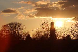 time-lapse sunset trees sun dawn
