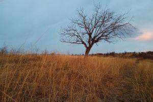 tree blue sky field