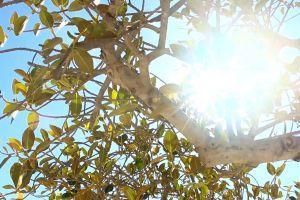 tree branches sun glare