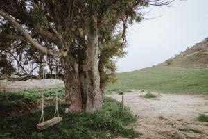 tree daylight swing