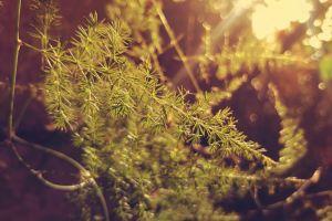 tree green branch moss color environment garden daylight selective focus flora