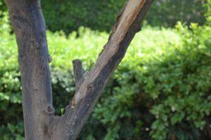 tree summer green