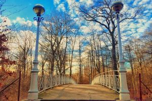 treee without leaves fallen leaves blue sky winter bridge