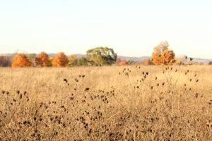 trees fall foliage open field grass field