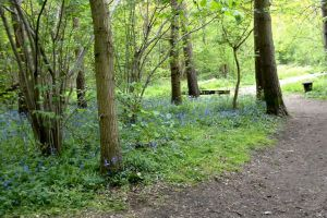 trees field bluebells forest nature daylight