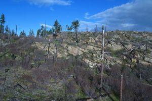 trees land deforestation documentation mountain