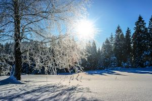 trees snow outdoor sunrise cold snowy sunlight freezing weather forest