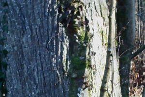 trees tree tree bark rind bald foliage