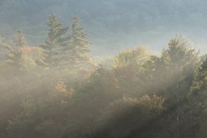 trees woods fog nature sunlight environment forest daylight foggy