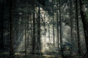trees woods sunlight sunbeam environment nature forest