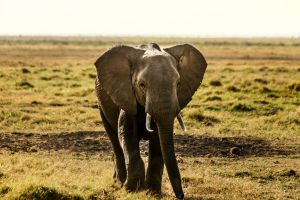 wanderlust landscape adventure sky outdoor africa wildlife photography