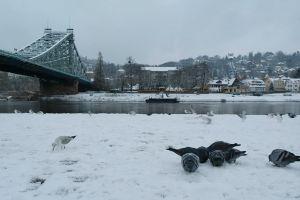 water pigeons animals weather snow flying bridge town