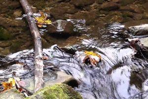 water rocks flowing stones stream