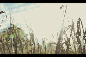 wheat wind turbine grass harvest people windmill farm