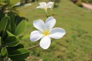 white flower garden flower garden natural flower park
