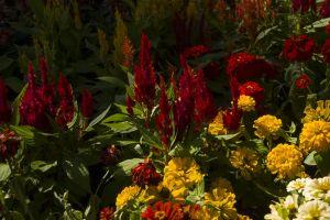 white petal farm field flowerbed outdoor colorful closeup flowers flower