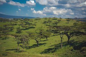 wild animals landscape kenya