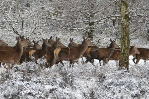 winter animals mammals weather herd trees cold deer forest snow