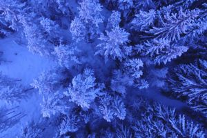 winter cold forest woods aerial shot scenic nature snow