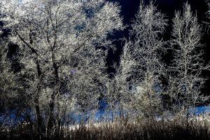 winter wonderland frost winter